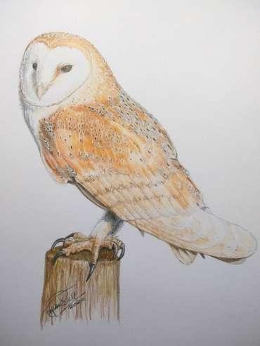 Thumbnail image of Ruth Randall,'Barn Owl' - Inspired | April