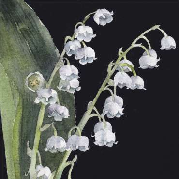 Thumbnail image of Vivienne Cawson, 'Lily of the Valley' - Inspired | July