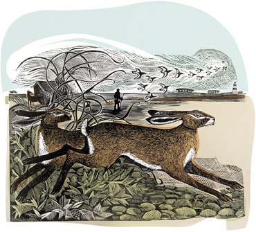 Orford Hares by Angela Harding