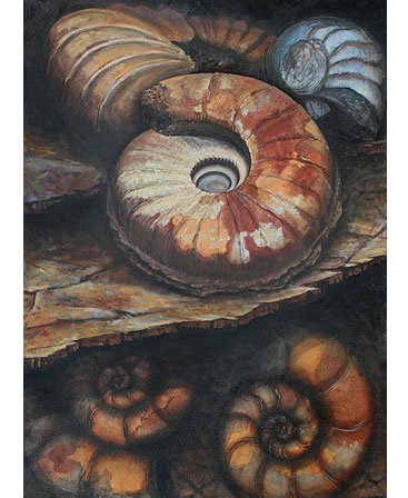 Thumbnail image of Ammonites by Jo Sheppard