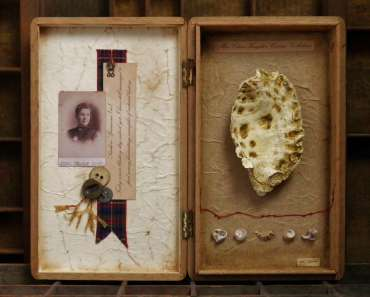 Thumbnail image of Miss Clara Knight's Curious Collections, Series One: Seashore Specimens (vi) by Joy Norman