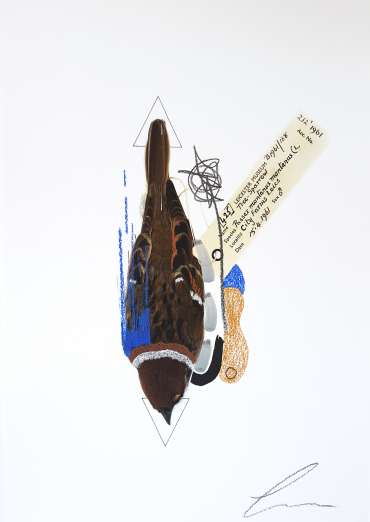 Thumbnail image of Tree Sparrow (Cobalt Blue) by Lucy Stevens