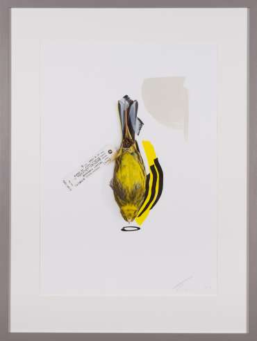 Yellowhammer (Vivid Imagination) by Lucy Stevens