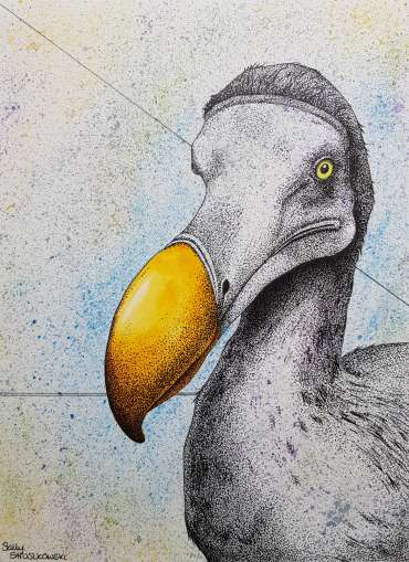 Thumbnail image of Portrait of a Dodo by Sally Struszkowski