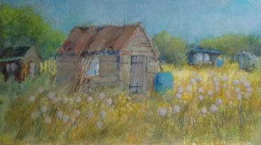 Allotments, 1 by Terry Whittaker